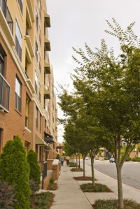A tree line sidewalk along a modern condo building