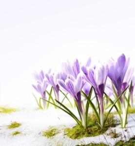 Vårvinter i fullmäktige