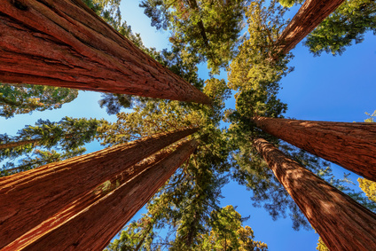 Träd av lämplig storlek för inventering? (www.fotoia.com)