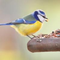 Kommunstyrelsen föreslår Fågelsången